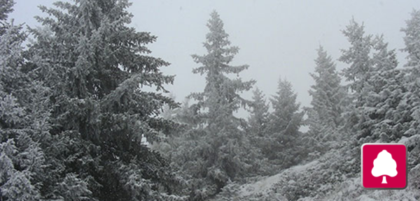 Schneeschuh-Wanderung Gyrenbad/Turbenthal